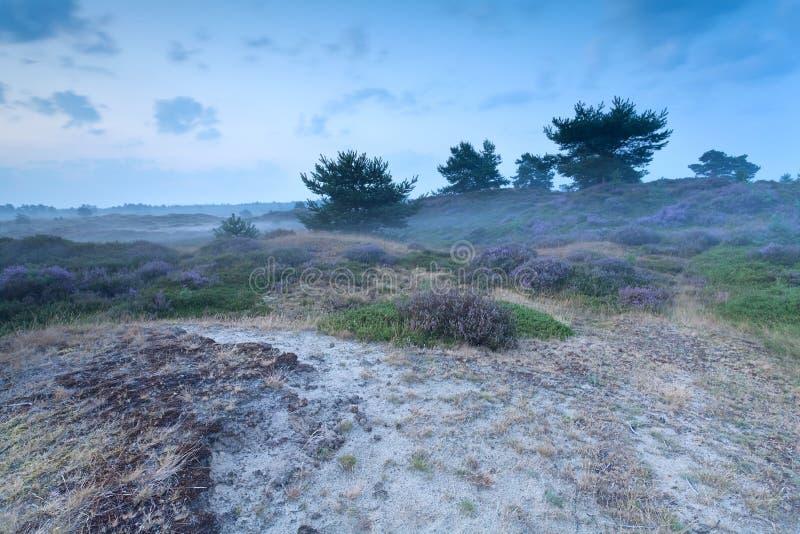 Mglisty półmrok na piasek diunach z wrzosem zdjęcie stock