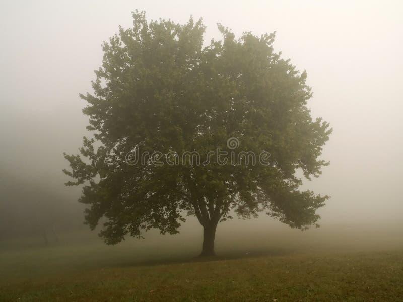 mglisty poranek drzewo zdjęcie royalty free