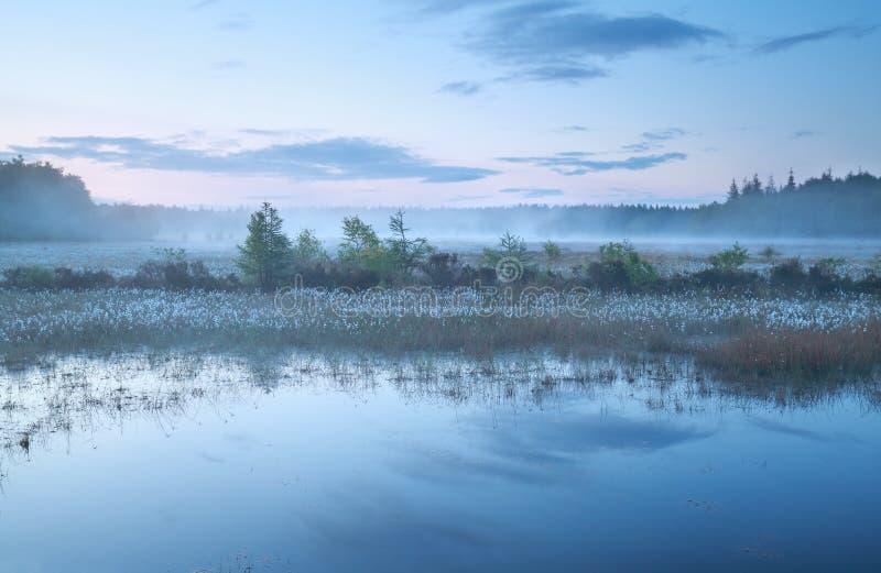 Mglisty ranek na bagnie przy półmrokiem zdjęcie royalty free