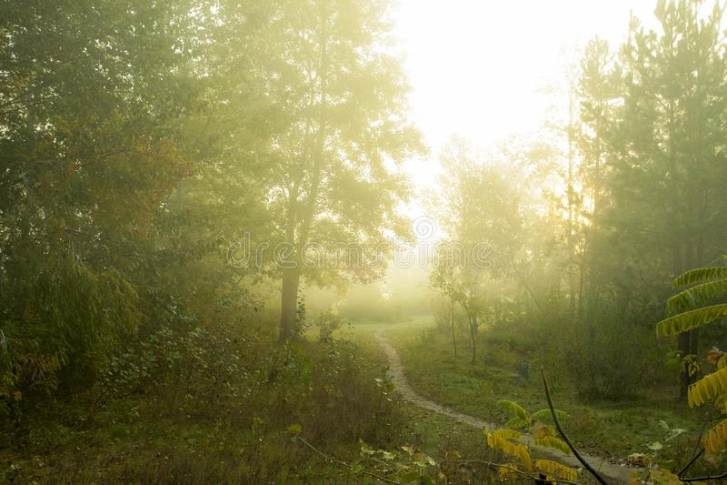 Mglisty ranek na lasowych Pięknych jesieni drzewach na mgle obrazy stock