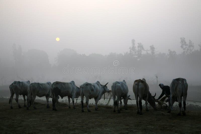 Mglisty ranek w Bengalia wsi Kumrokhali zdjęcie stock