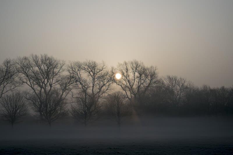 Mglisty ranku wschód słońca zdjęcie stock
