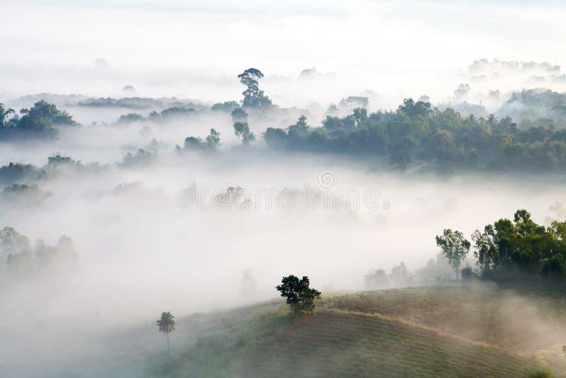 Download Mglisty Ranku Wschód Słońca W Górze Przy Khao-kho Phetchabun, Thailan Obraz Stock - Obraz złożonej z obywatel, ranek: 53782957