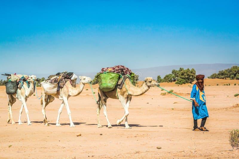 MHamid,摩洛哥-双十国庆,2013年 走在传统衣裳的沙漠撒哈拉的年轻巴巴里人有被装载的骆驼的 免版税图库摄影