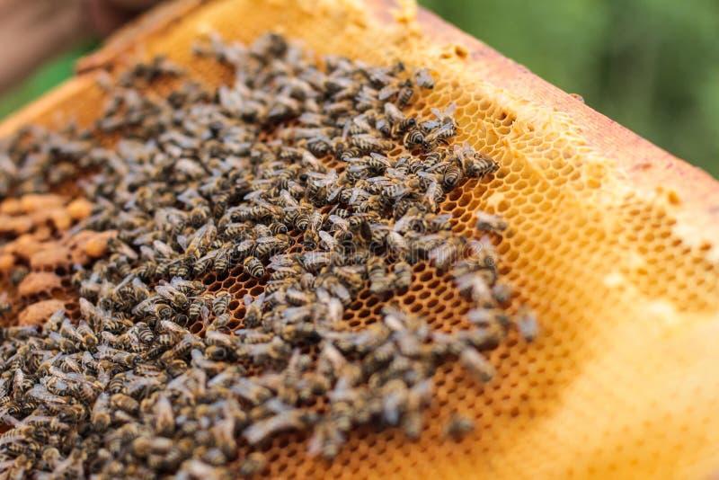 Miód i pszczoły obrazy royalty free