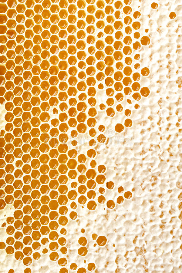 Miód robi w honeycombs obrazy stock