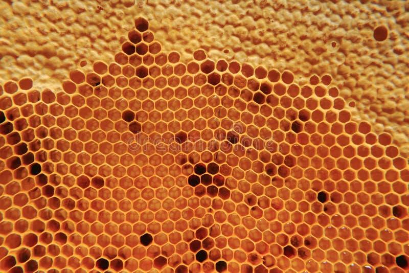 Miód w wosk komórek tle zdjęcia royalty free