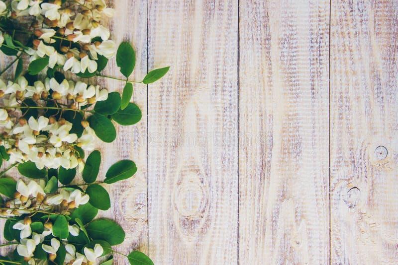 Miód z akacją i herbatą fotografia royalty free