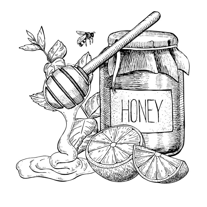 Miód z cytryny i mennicy wektoru rysunkiem Słój, drewniana łyżka, hon royalty ilustracja