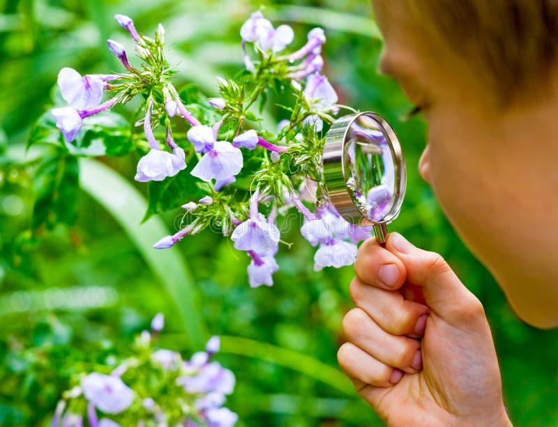 Miúdo observando a flor fotografia de stock