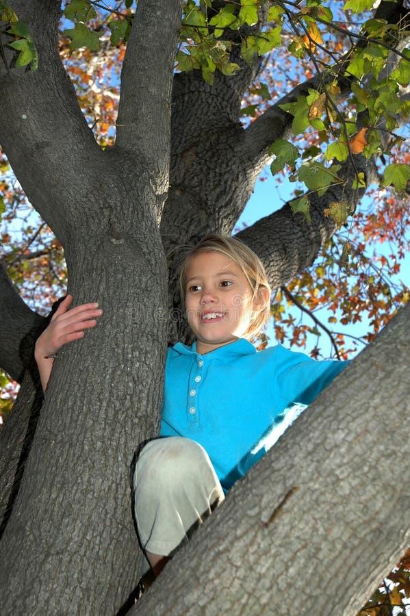 Miúdos nas árvores fotografia de stock