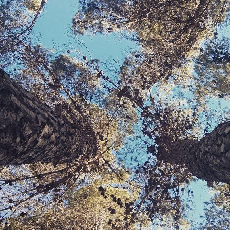 Między dwa drzewami zdjęcie stock