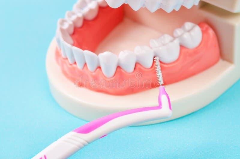 Międzyzębni muśnięcia z denture zdjęcie royalty free
