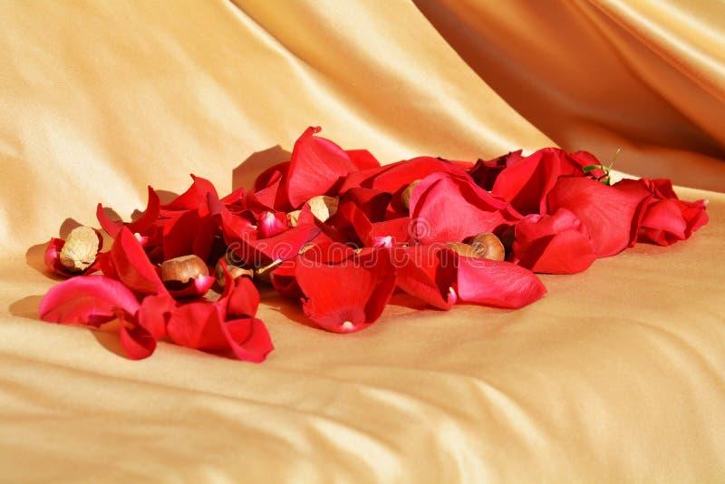 Miękcy czerwoni płatki obrazy stock