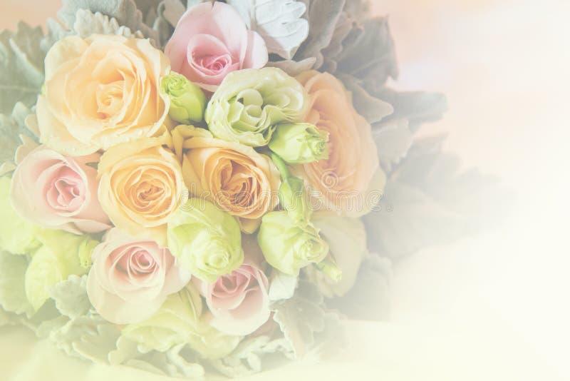 Miękka część zamazująca wzrastał kwiatu pastelowego koloru styl zdjęcie stock