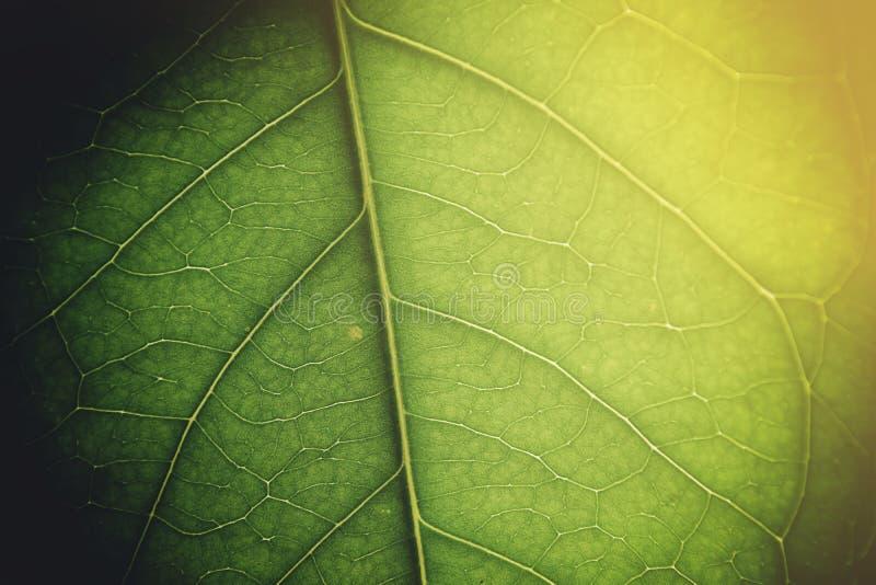 Miękki światło na zielonym liściu obraz royalty free