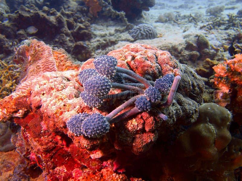 Miękki koral fotografia stock
