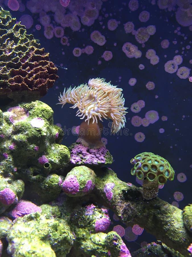 Miękki koral zdjęcia stock