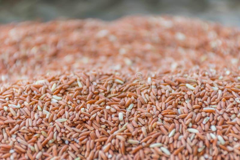 Miękkiej części zamazującej i miękkiej ostrości powierzchni tekstury sucha metoda czerwoni kleiści ryż, ryżowa jagodowa nasieniod zdjęcie royalty free