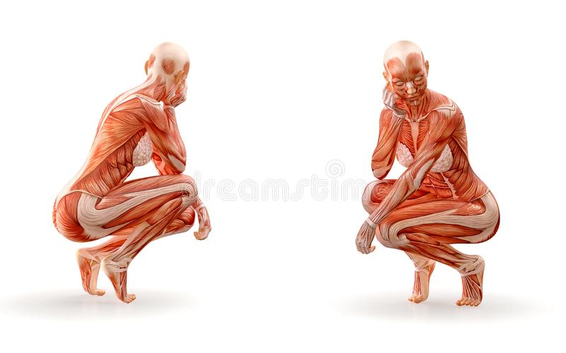 Mięsień anatomii żeńskiej postaci trening, odizolowywający Opieki zdrowotnej, sprawności fizycznej, tana, diety i sporta pojęcie, ilustracja wektor