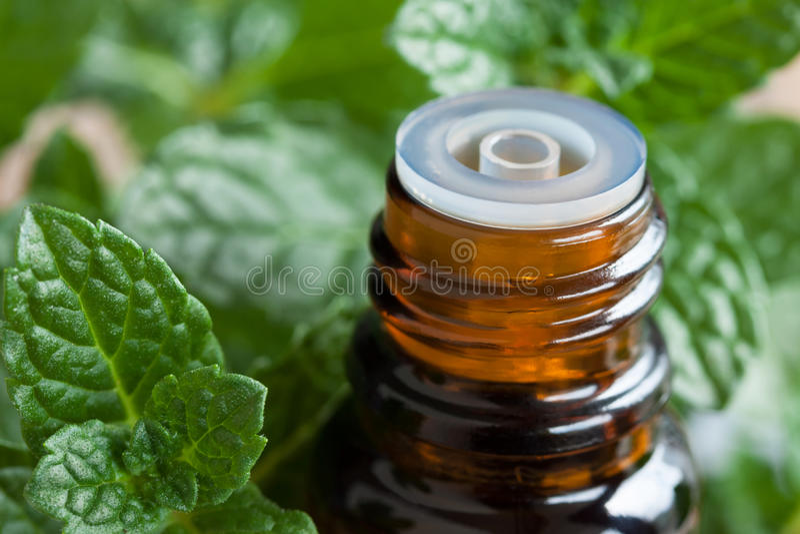 Miętówka istotny olej - butelka z świeżymi miętowymi liśćmi obraz royalty free