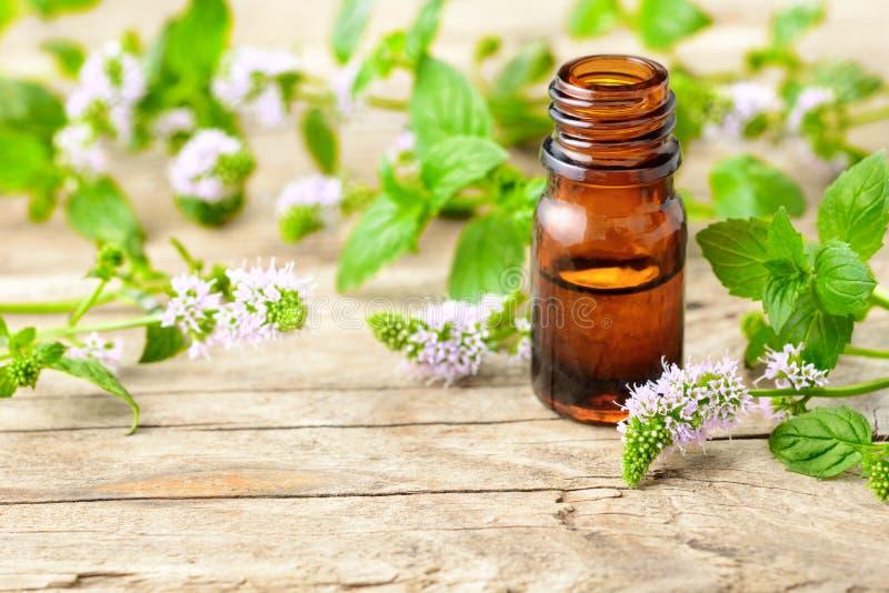 Miętówka istotny olej i miętówka kwiaty na drewnianej desce zdjęcie royalty free