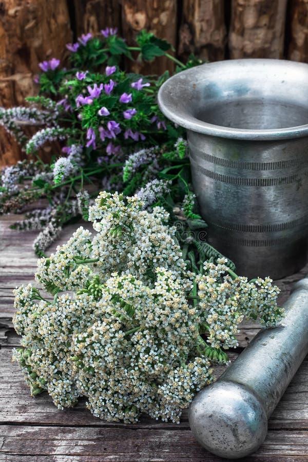 Miętówka jest odwiecznie zielnym rośliną zdjęcie royalty free
