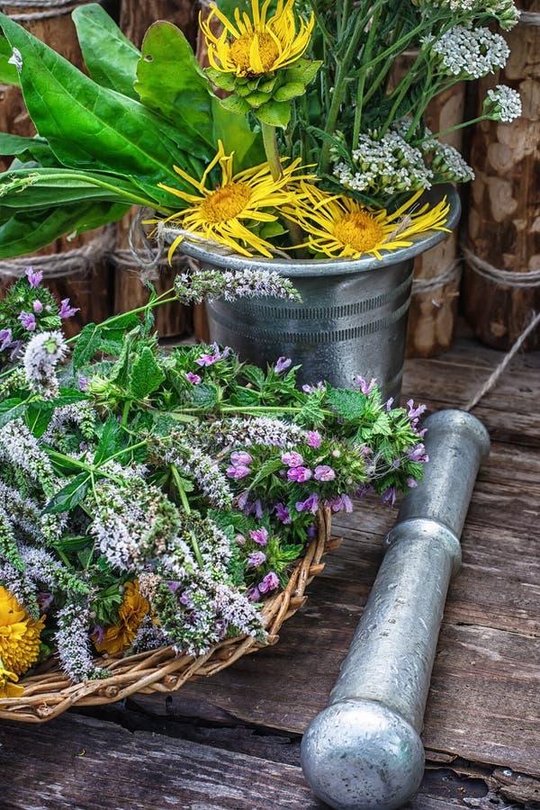 Miętówka jest odwiecznie zielnym rośliną fotografia royalty free