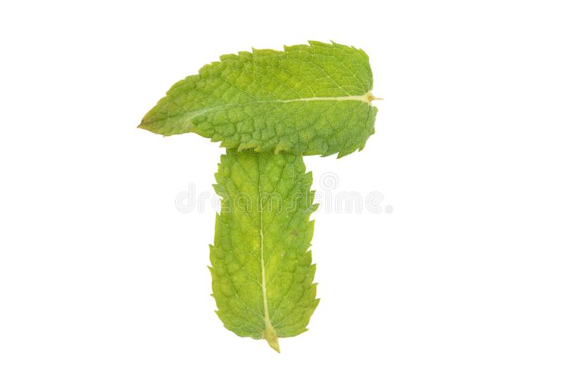 Miętówka liście na białym tle zdjęcia stock