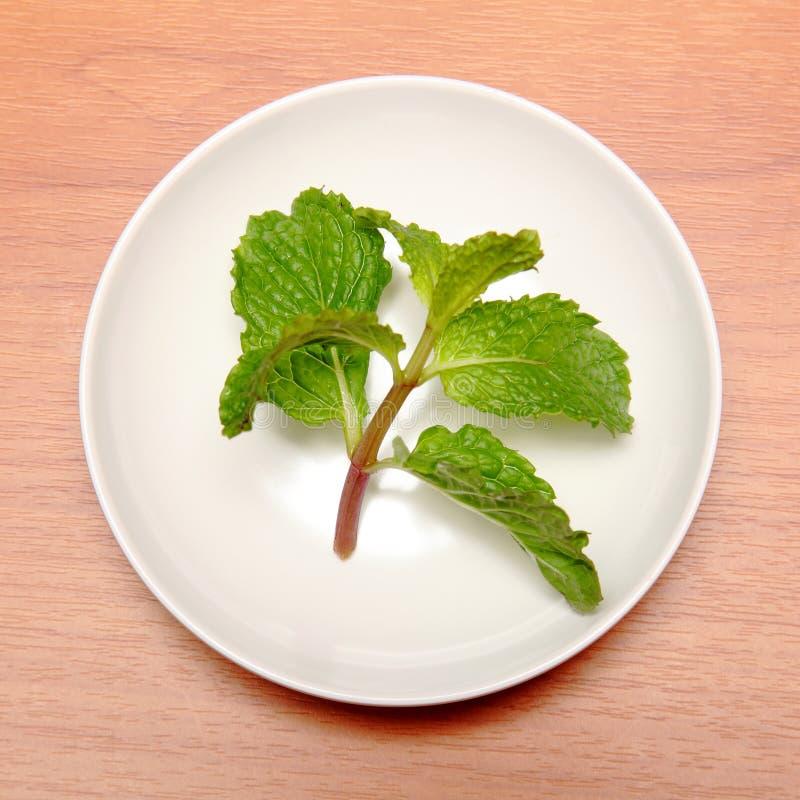 Miętówka liście w małym talerzu zdjęcia stock