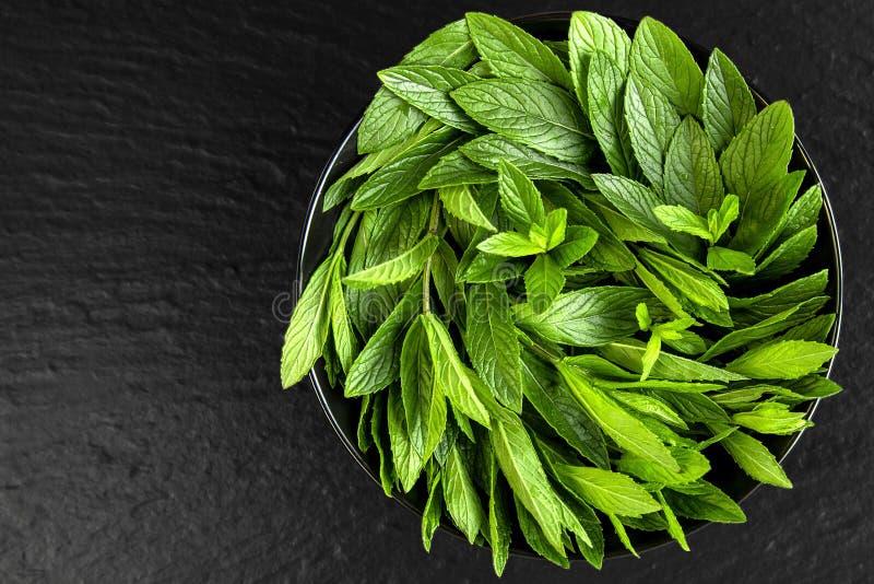 miętówka Soczysta, świeża, aromatyczna zieleni mennica, fotografia stock
