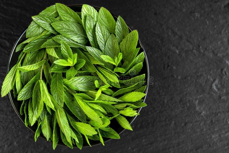 miętówka Soczysta, świeża, aromatyczna zieleni mennica, obraz stock