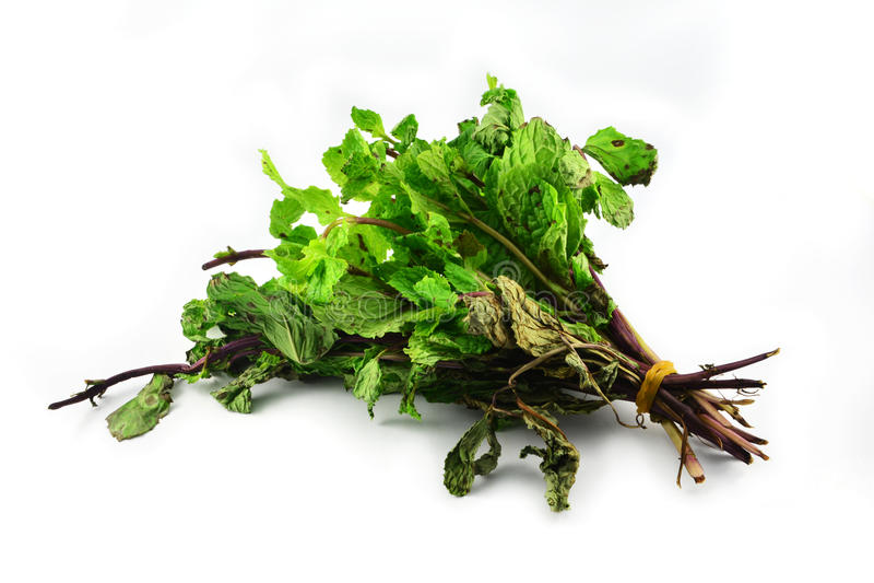 Miętowi warzywa nieżywi zdjęcie royalty free
