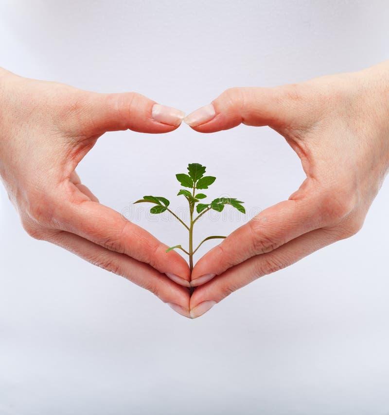 Miłość i gacenie natura zdjęcia royalty free
