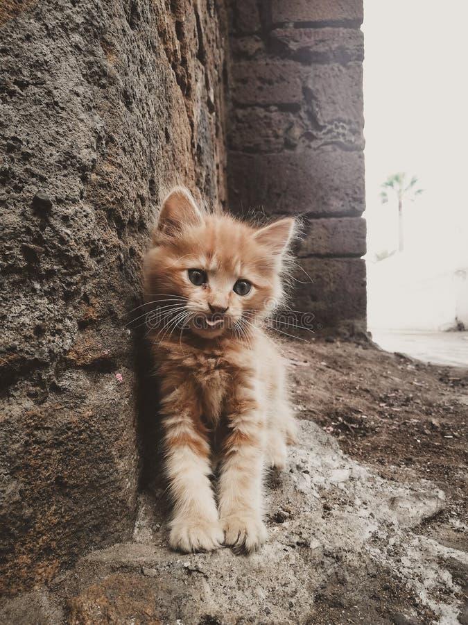Miłość i kot obrazy stock
