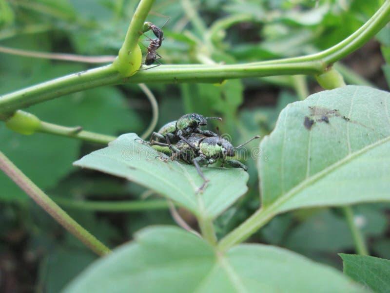 Miłość insekty fotografia royalty free