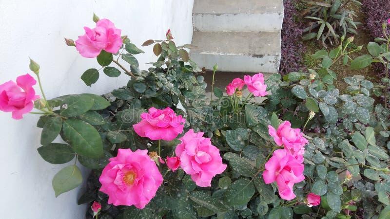 Miłość kwiaty obraz royalty free