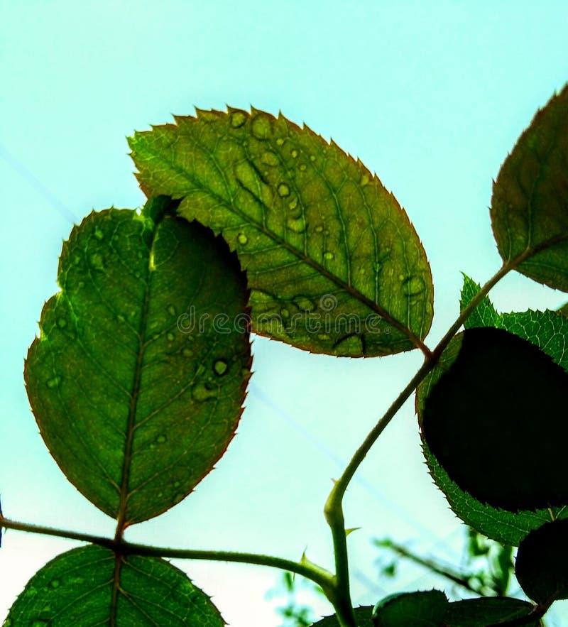 Miłość liście obraz stock