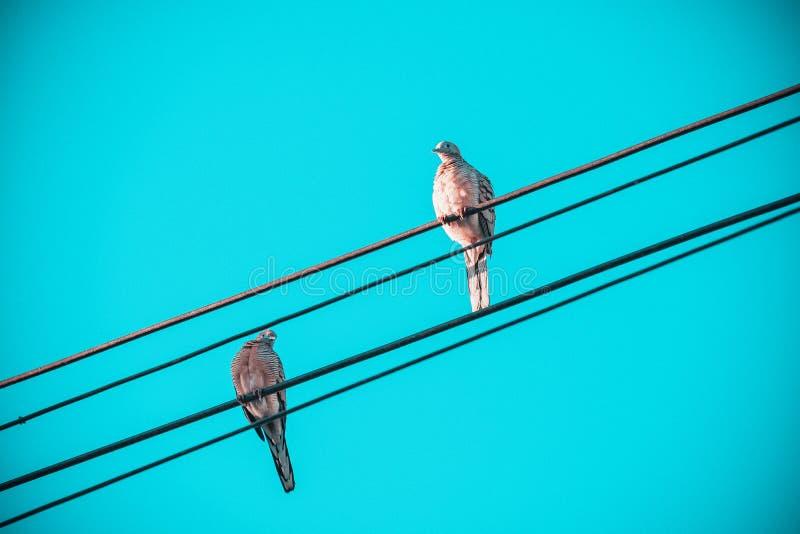 Miłość ptaki, Dwa małego ptaka na elektrycznego kabla linii, ptaki umieszczał na elektrycznych drutach z jasnym rocznika niebem j fotografia royalty free