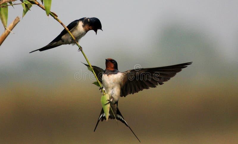 Miłość ptaki i drzewo obrazy stock