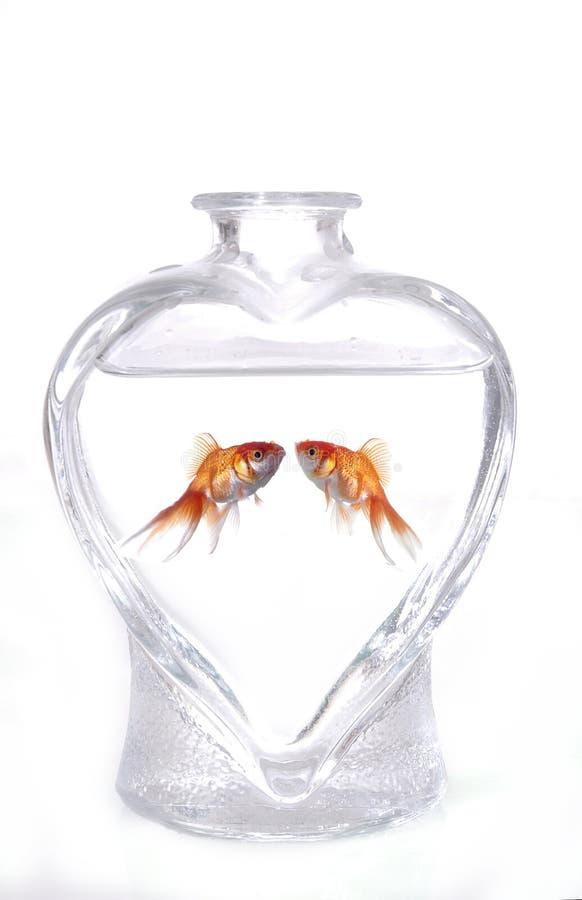 miłość ryb obrazy stock