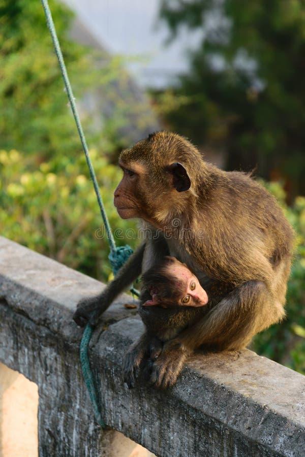 Download Miłość zwierzę obraz stock. Obraz złożonej z haiti, miłość - 57669023