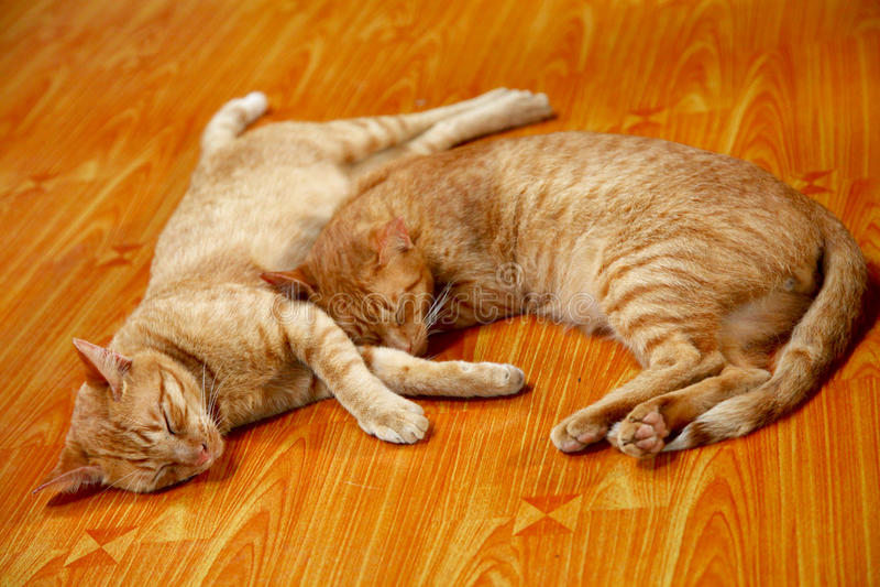 Miłości dwa koty śpi wpólnie fotografia royalty free