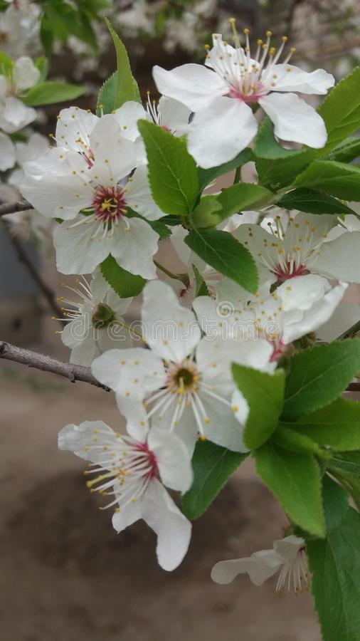 Miłości wiosny kwiaty zaświecają jak sztuki słońca zieleni biel fotografia royalty free