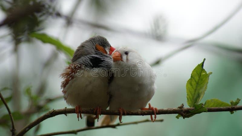 Miłości wisper zdjęcia royalty free