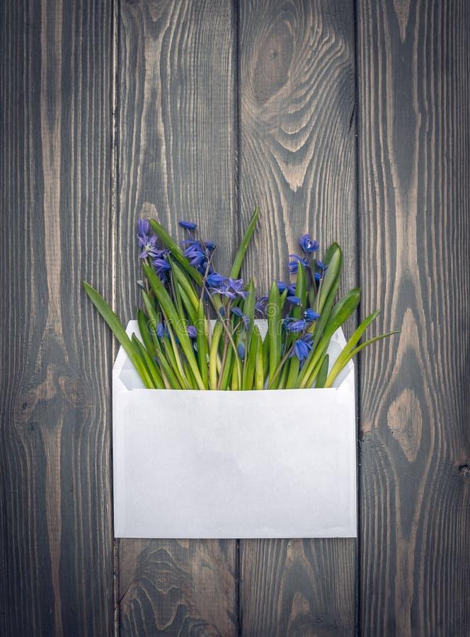 Miłości wyznanie Koperta z bukietem kwiaty niebieska scilla wiosna zdjęcia stock