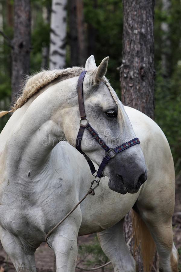 Miło dekorujący koń przy lokalny fiesta, Andalucia obraz stock
