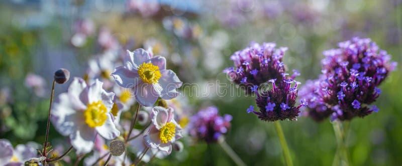 miÅ'y kwiat w ogrodzie zdjęcie stock