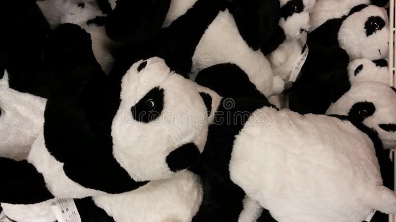 Miś pluszowy pandy niedźwiedzie zdjęcie royalty free