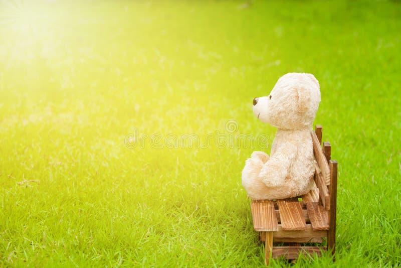 Miś siedzi samotnie na drewnianej ławce w zielonym gazonie zdjęcia royalty free